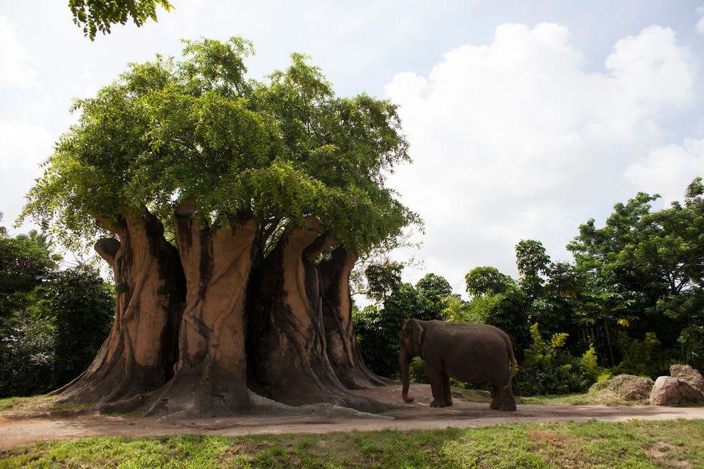 Best Zoo Winners: 2018 10Best Readers' Choice Travel Awards