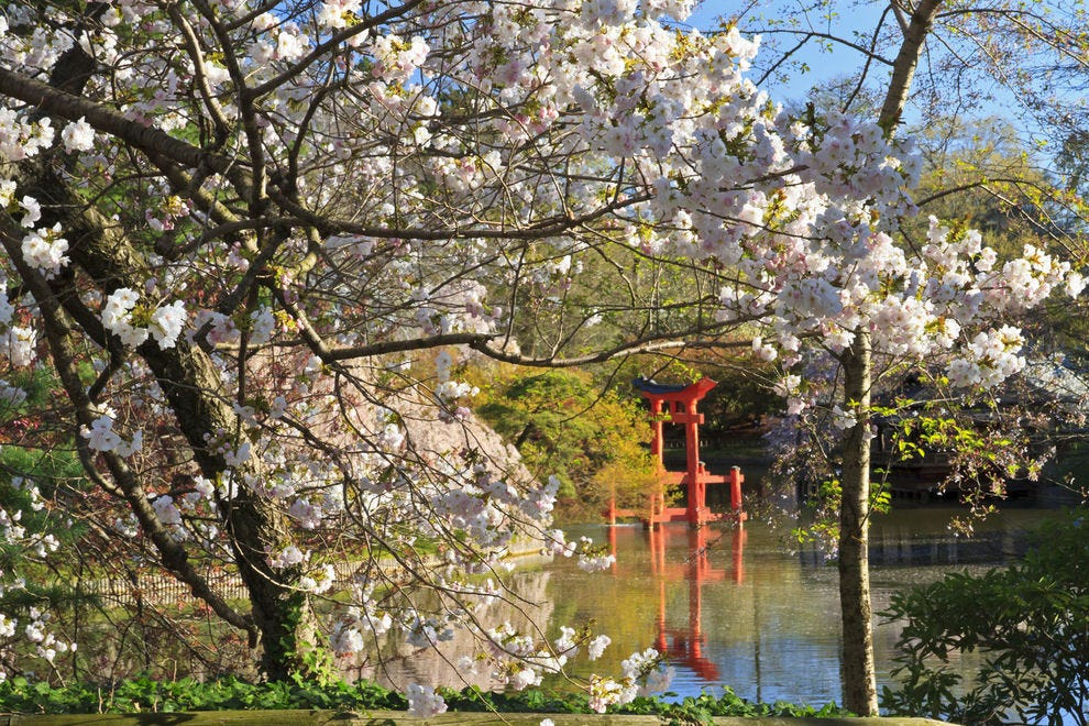 10 places to see beautiful cherry blossoms and when - Hotels near brooklyn botanical garden ...