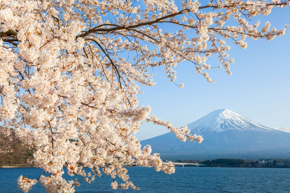 A beautiful view of Mt. Fuji among the blossoms