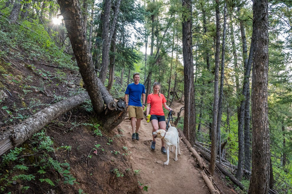 Get matched up with a hiking companion through Aspen Animal Shelter's Rent-a-Pet program