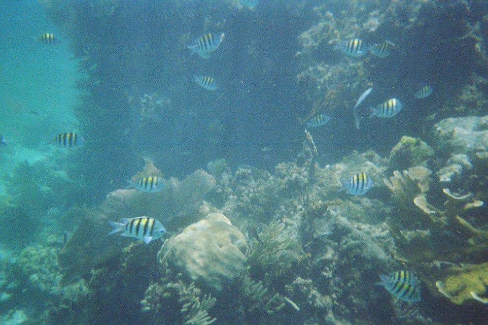 Cancún Scuba Diving and Snorkeling: 10Best Mexico Scuba Reviews