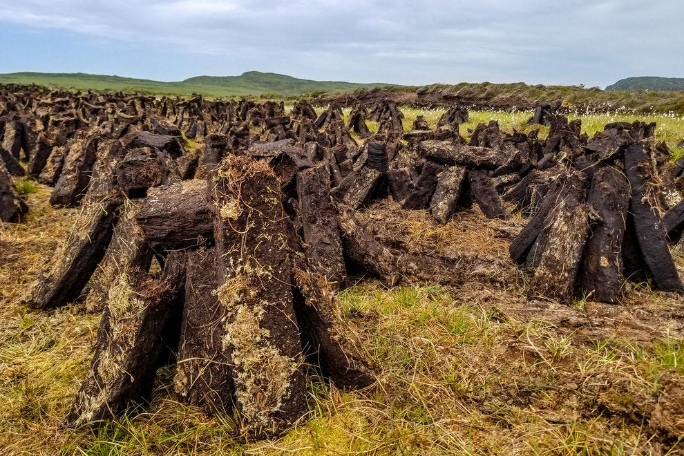 Cut peat drying in the summer sun