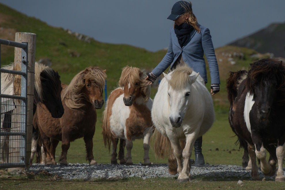 The Shetland Islands are known for the miniature ponies