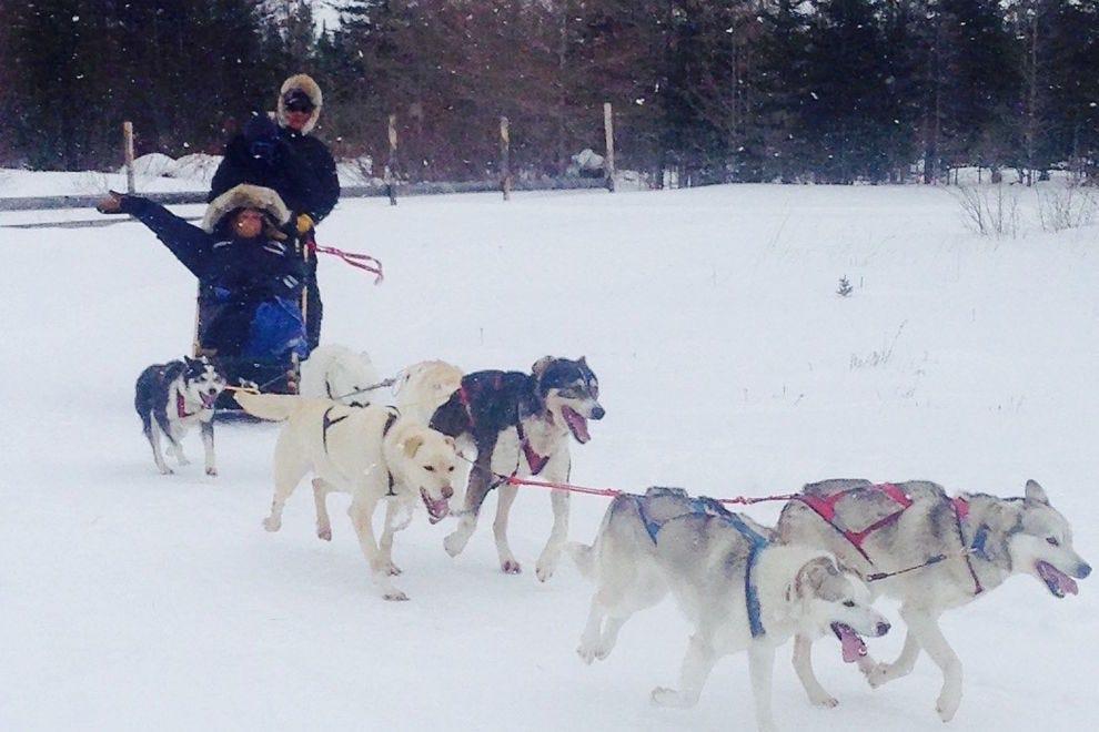 Dog sledding in Churchill is exhilarating