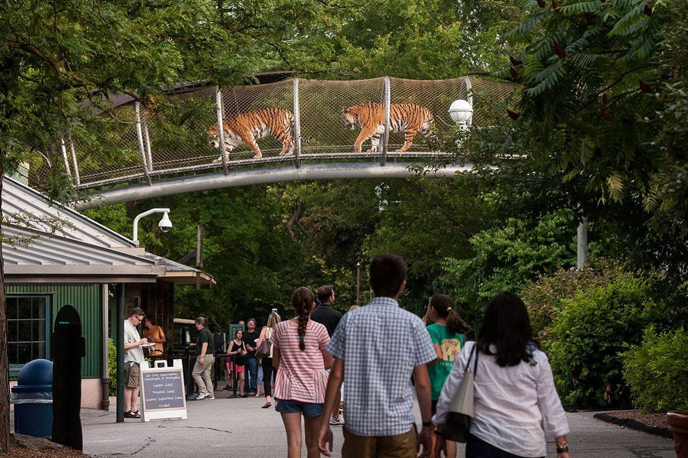 Big Cat Crossing gives the Zoo's large felines more room to roam