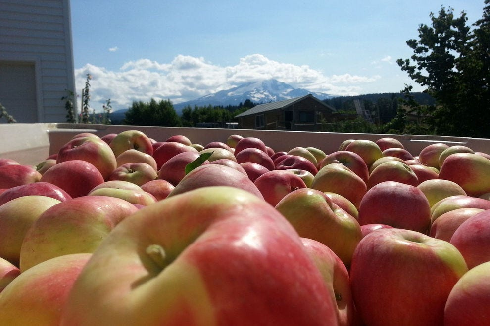 This winning orchard grows more than 80 types of apples