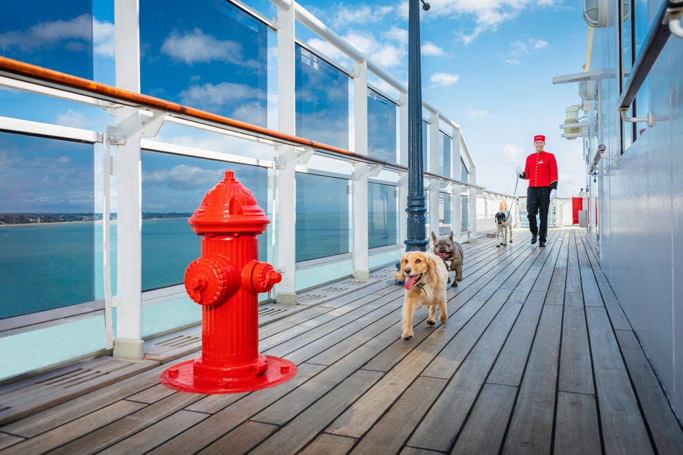 Human guests aren't the only ones pampered on the <i>Queen Mary 2</i>