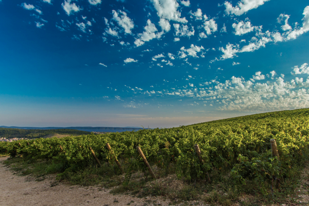 The rolling hills of Croatia have become a surprising wine region.