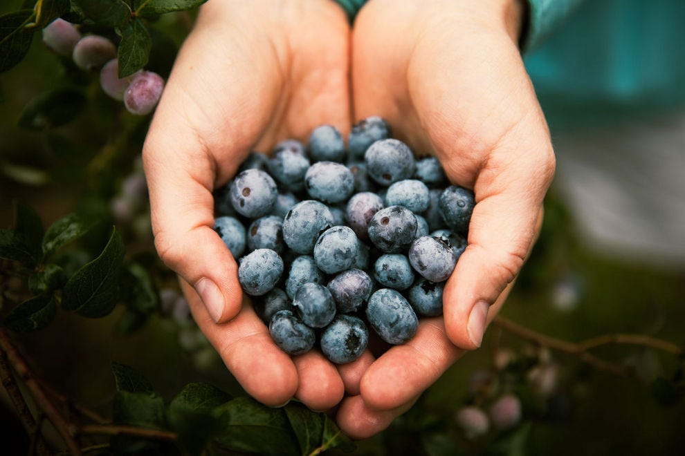 How the New Jersey Pine Barrens became the world's blueberry capital