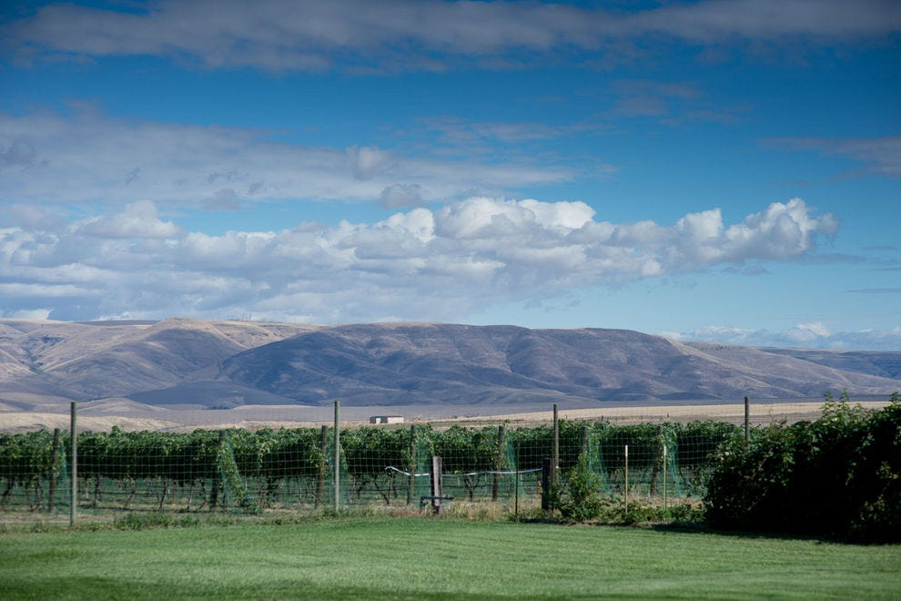 Idaho wine is the Pacific Northwest's greatest secret