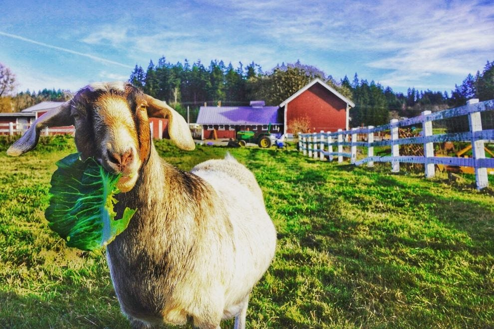 Whidbey's Orchard Kitchen hosts dinner three nights a week, with a special winter schedule that means Thursday is locals' night