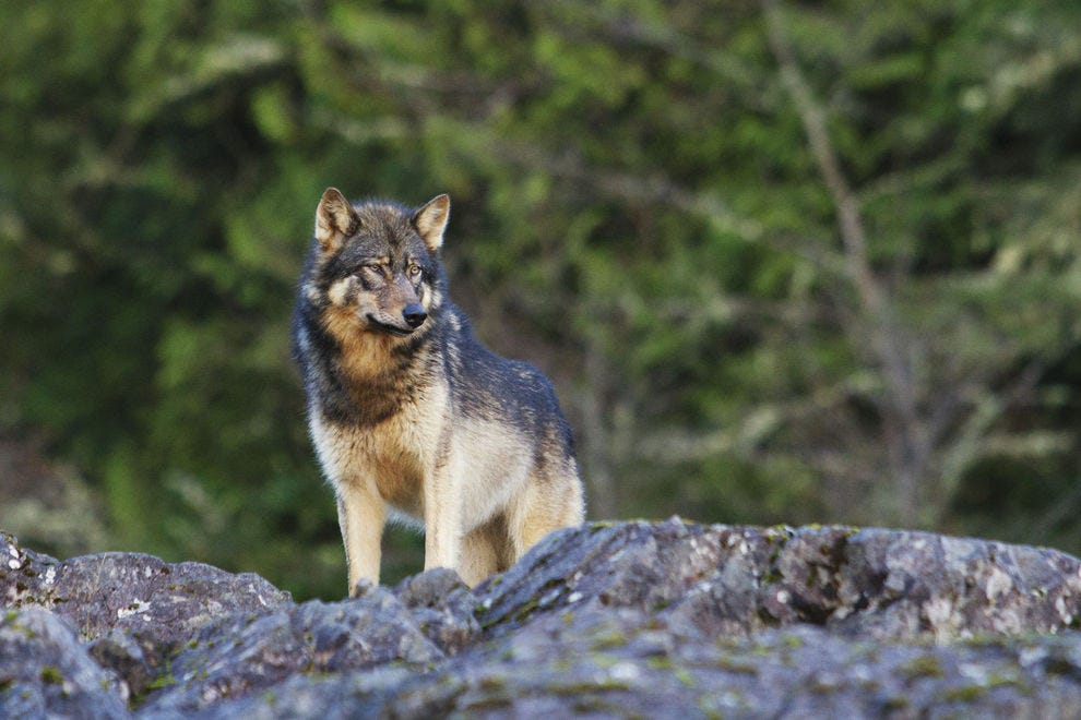 Wildlife abounds in this exquisitely rugged part of the world