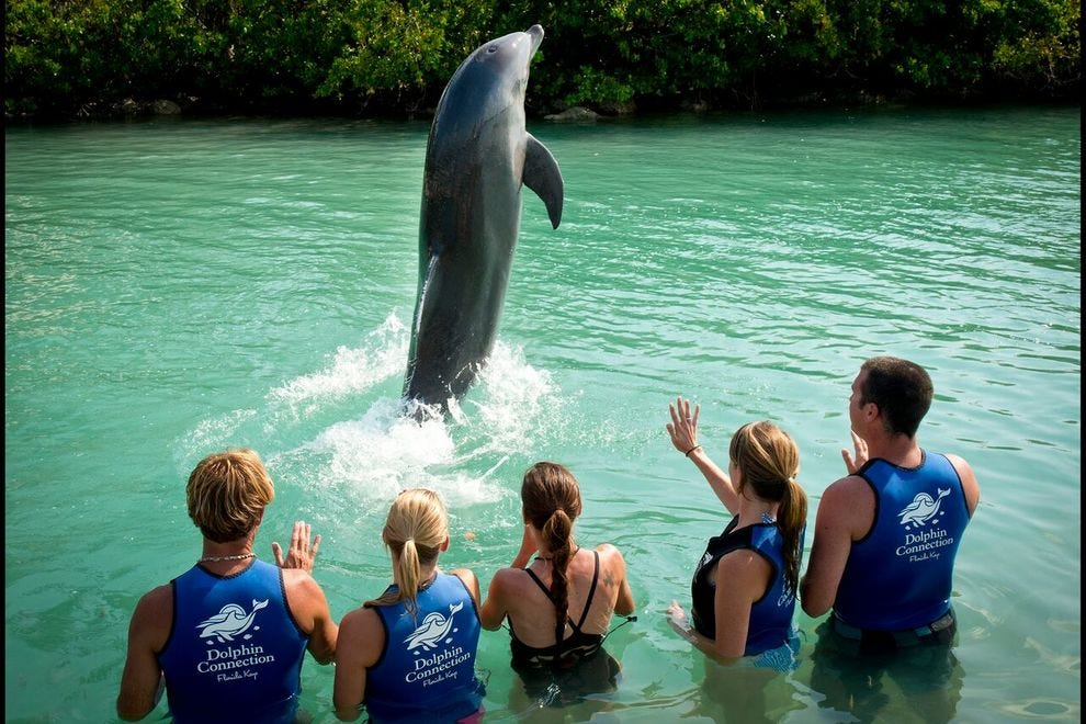 Dolphin Connection at Hawks Cay Resort offers three different dolphin interactions