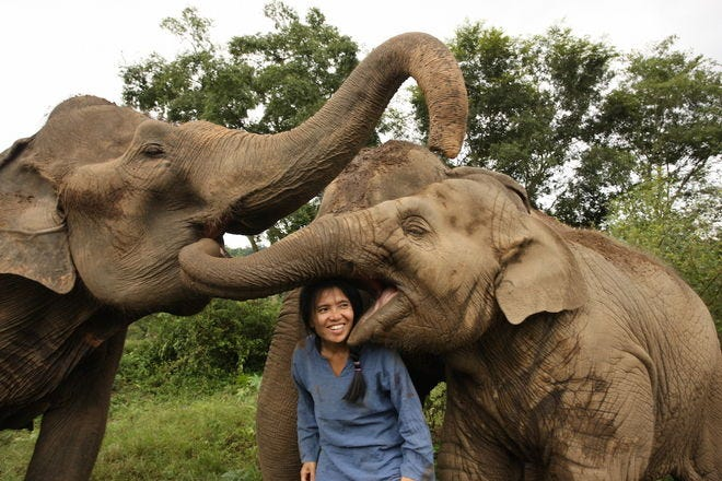 10 places you need to go to ethically interact with elephants