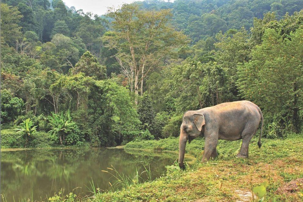 Phuket Elephant Park is set against the backdrop of a national park