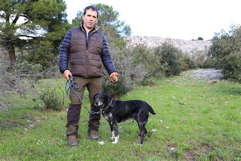 Mousti and his handler William, holding a handful of black truffle