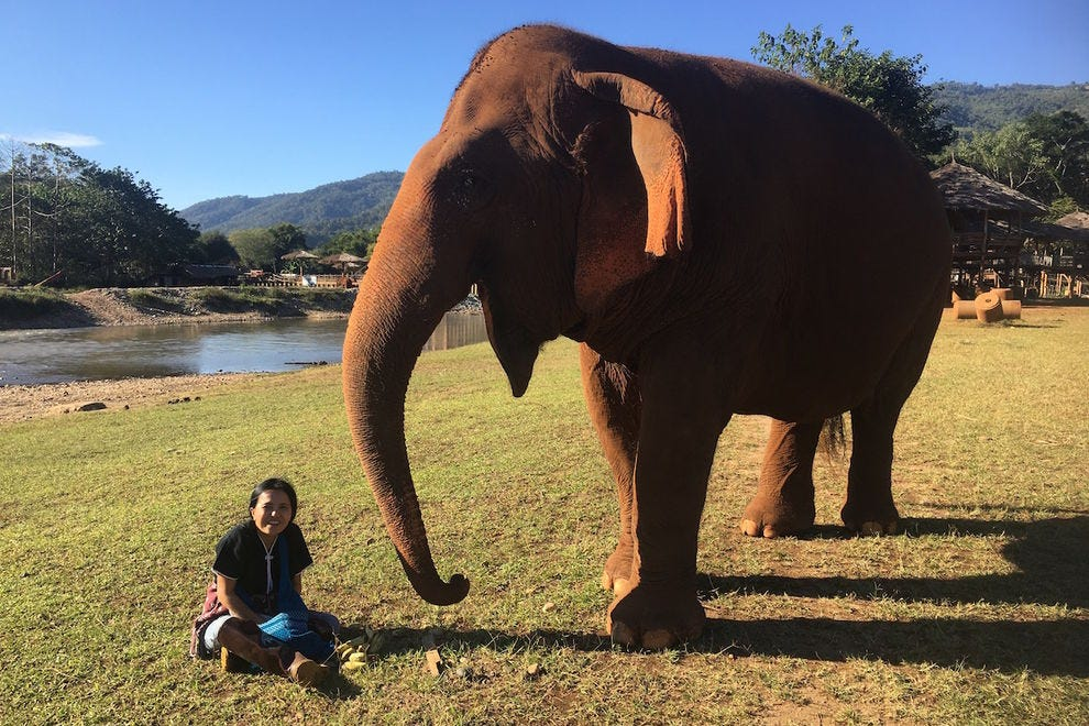 Lek Chailert hanging out with one of her elephant friends