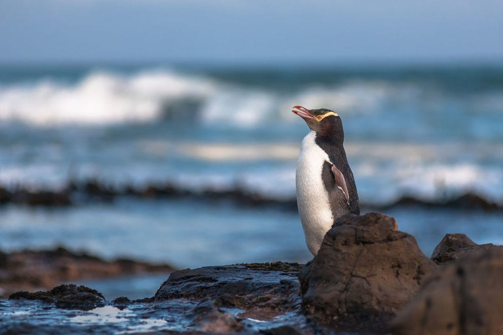 10 of the least known islands you should visit to see wildlife