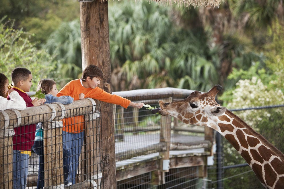 These animal exhibits are well worth a trip to the zoo