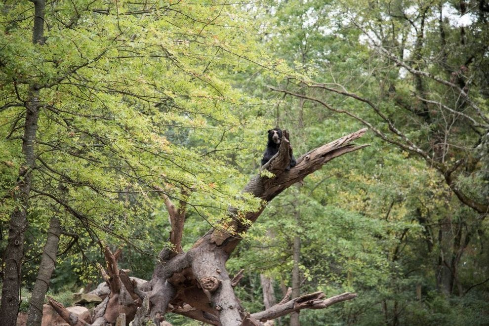 Expedition Peru: Trek of the Andean Bear
