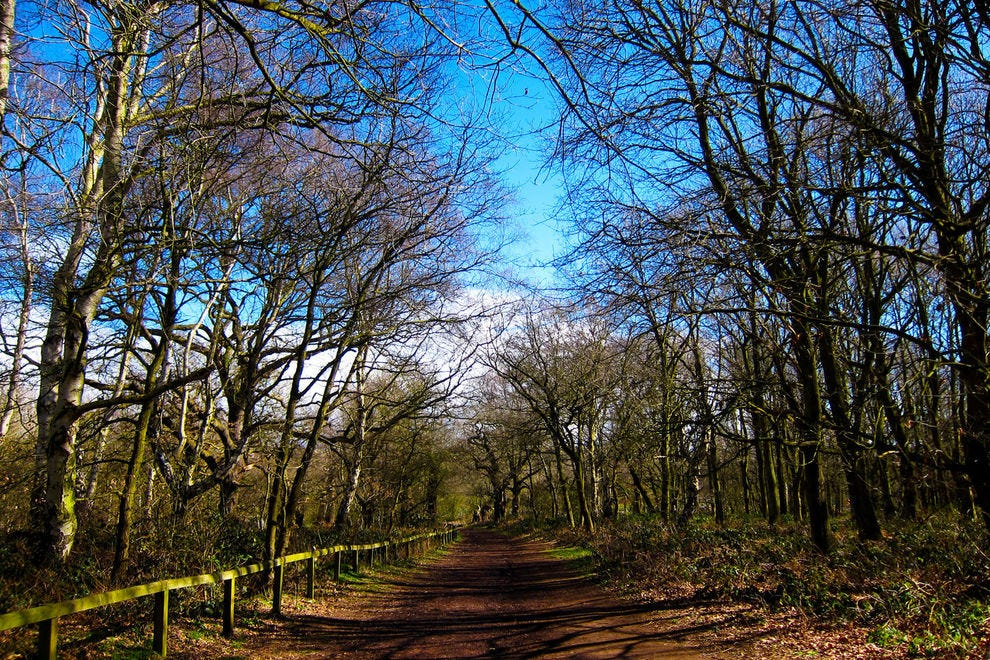 Follow the same paths through Sherwood Forest where legend says Robin Hood once walked.