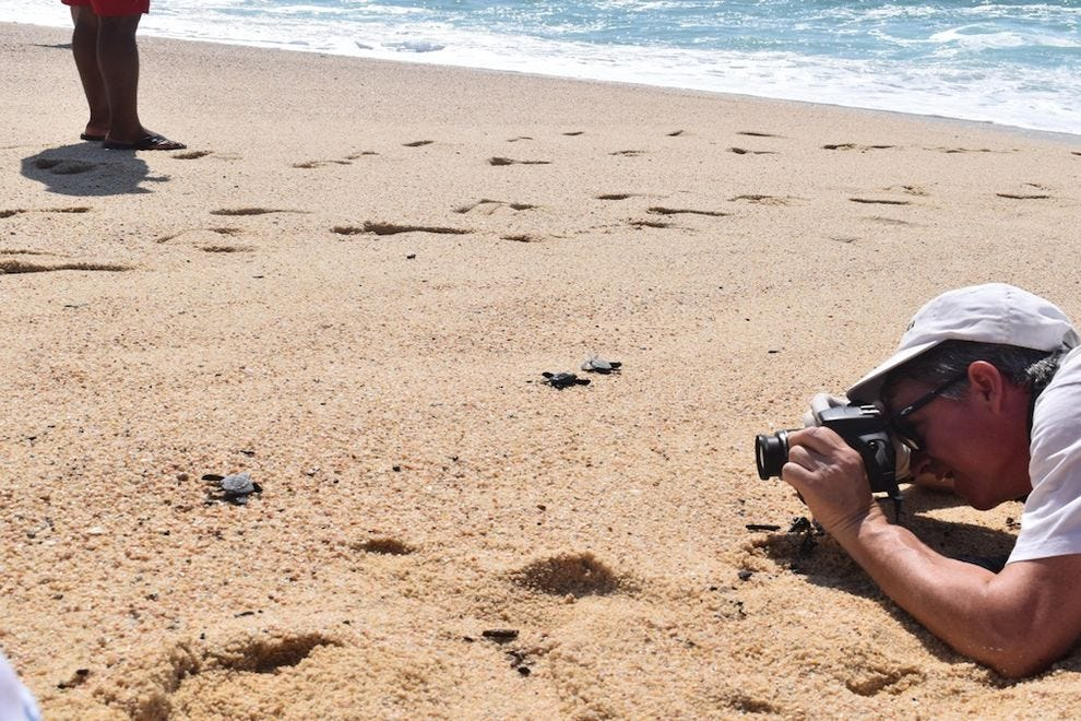 "Paradisus Los Cabos features a ""Welcome To Life"" program during sea turtle nesting season"