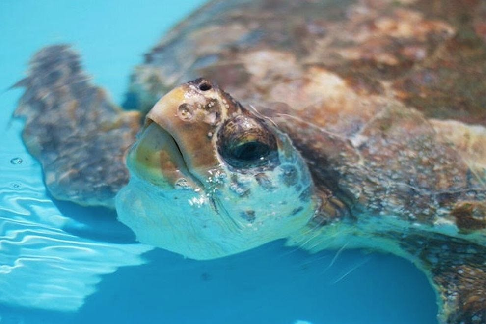 "Jupiter Beach Resort & Spa offers a ""Stay & Save the Sea Turtles"" package"