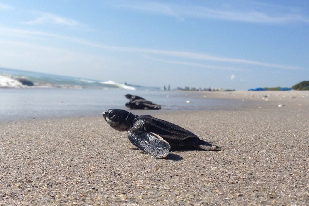 10 places where you can help endangered sea turtles hatch