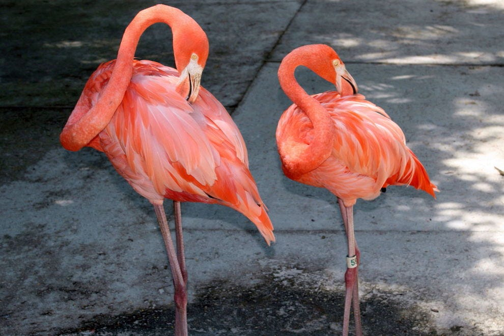 Flamingos are among the most photogenic birds, often seeming to pose as they do here.