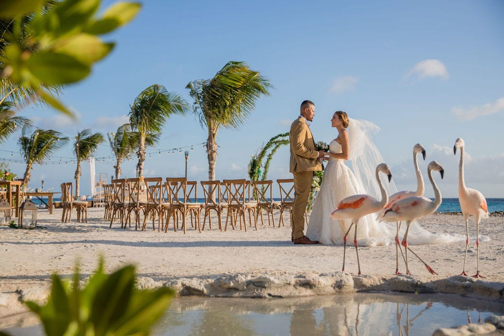 Flamingos inspire romance and, at Renaissance Aruba, add exotic flair to wedding photos.