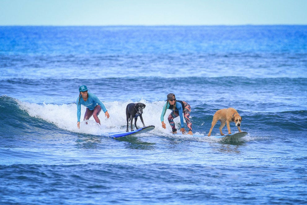 Luna the surf dog & friends