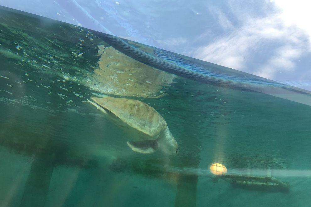 Exploring Sea Turtle, Inc.