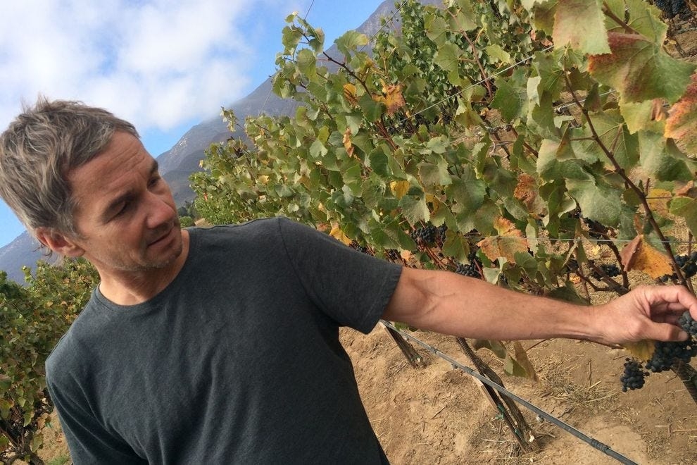 Paul Clifton, director of winemaking at Hahn Family Wines inspects the vines