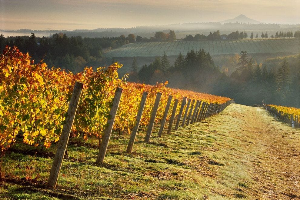 Ponzi Vineyards is not only a leader in sustainability but also helped put Oregon wines on the international map