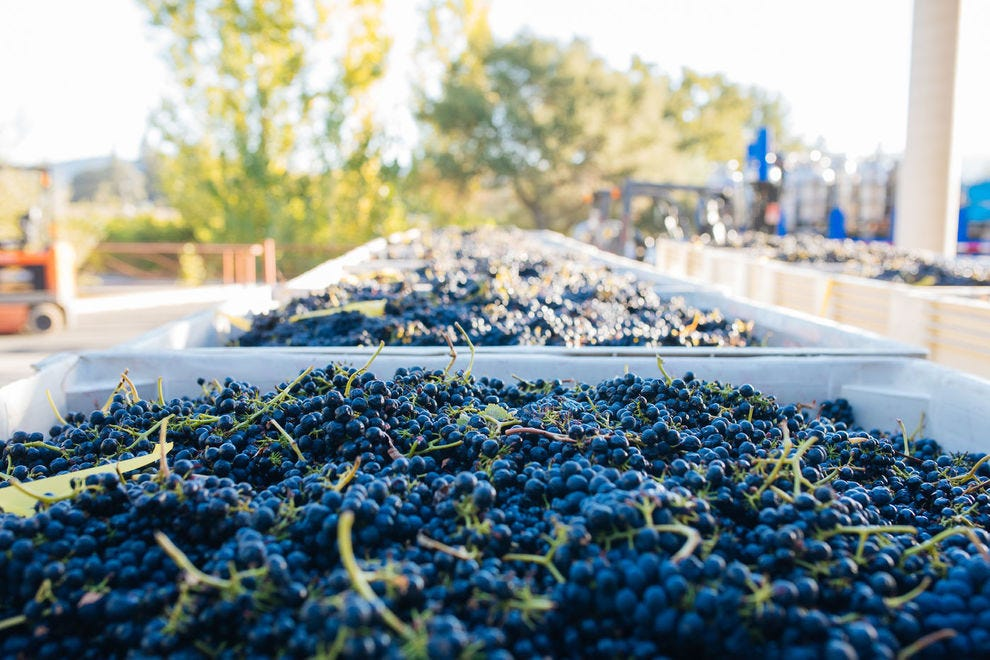 All vineyards at Cakebread Cellars are farmed sustainably