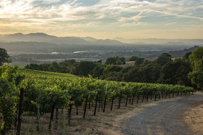 West Coast wineries who are making amazing sustainable wines