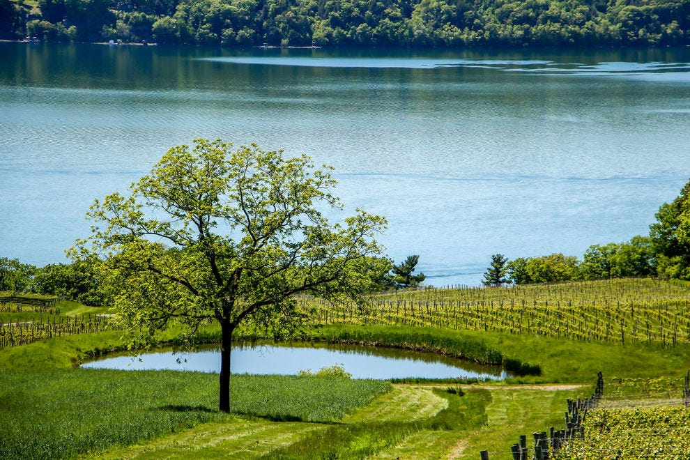 Winning American wine region produces top-notch riesling