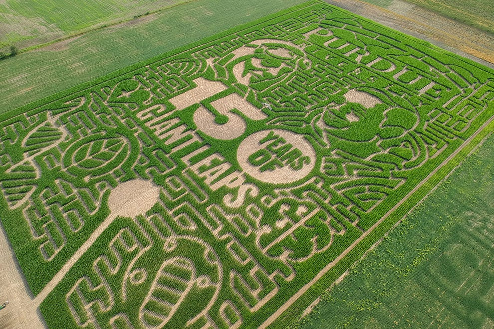 Winning maze covers 18 acres with nine miles of trails