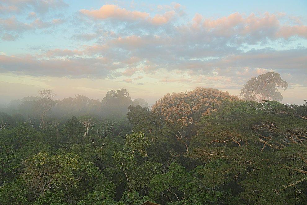 The majestic jungle canopy