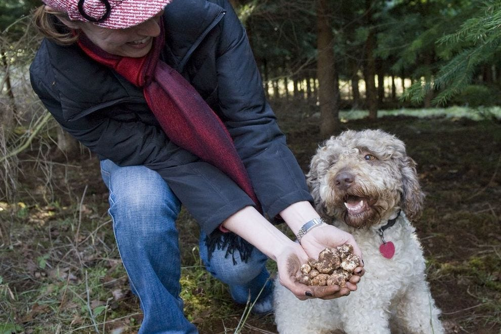 The Oregon Truffle Festival celebrates the season throughout two winter weekends