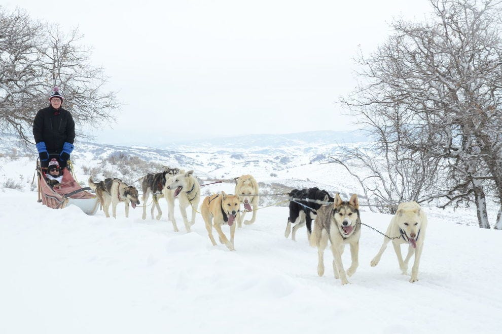Sled dogs take winter lovers into Steamboat's backcountry