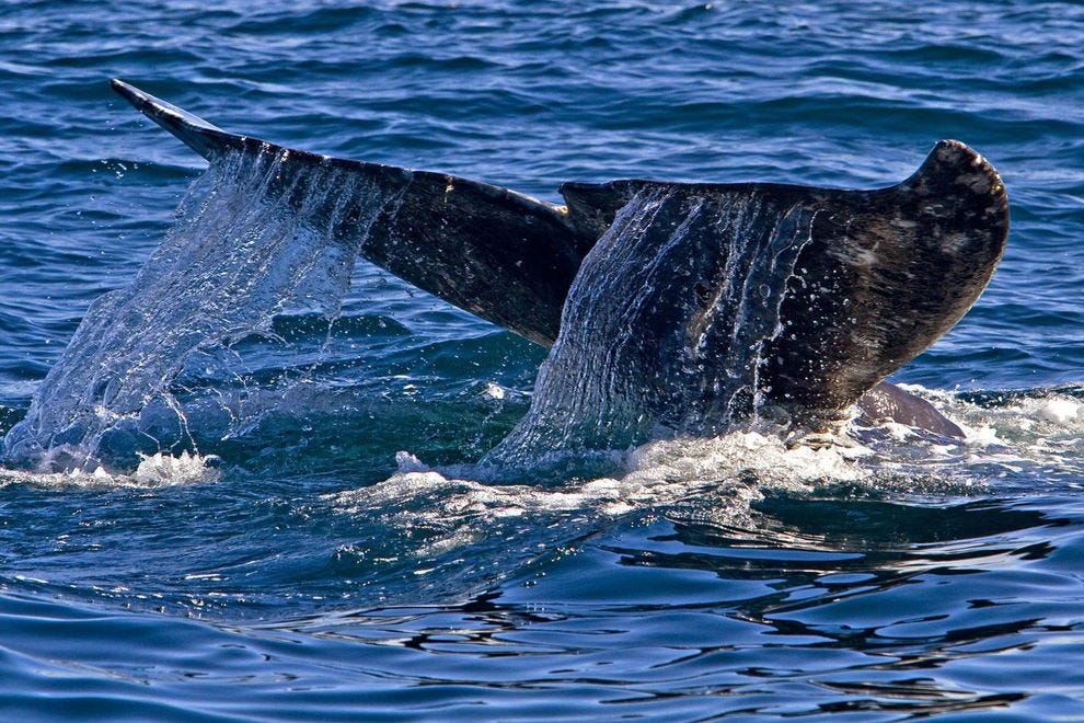 The San Diego coast is a prime spot for whale watching in winter months