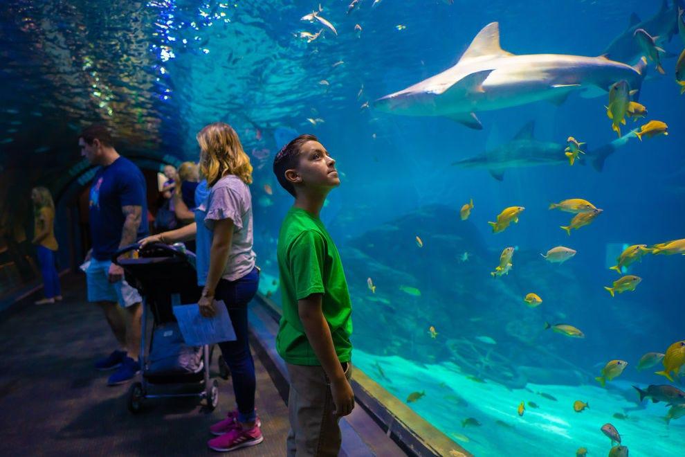 Vote For Your Favorite Aquarium in North America!