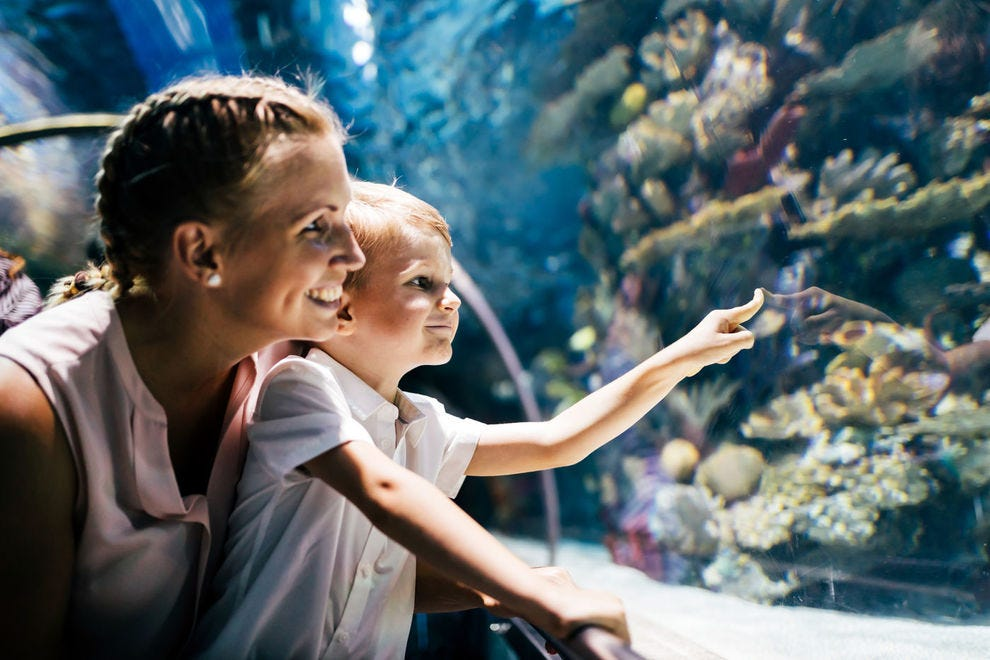Explore the world's waterways at these top aquariums