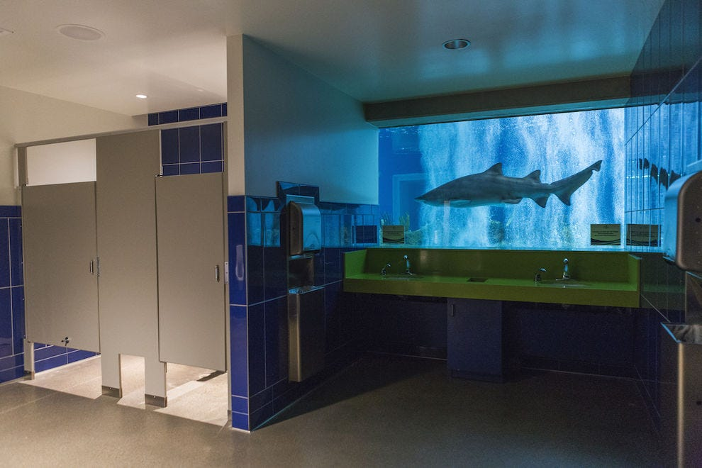 Yes, there's a shark tank in the restroom of OdySea Aquarium