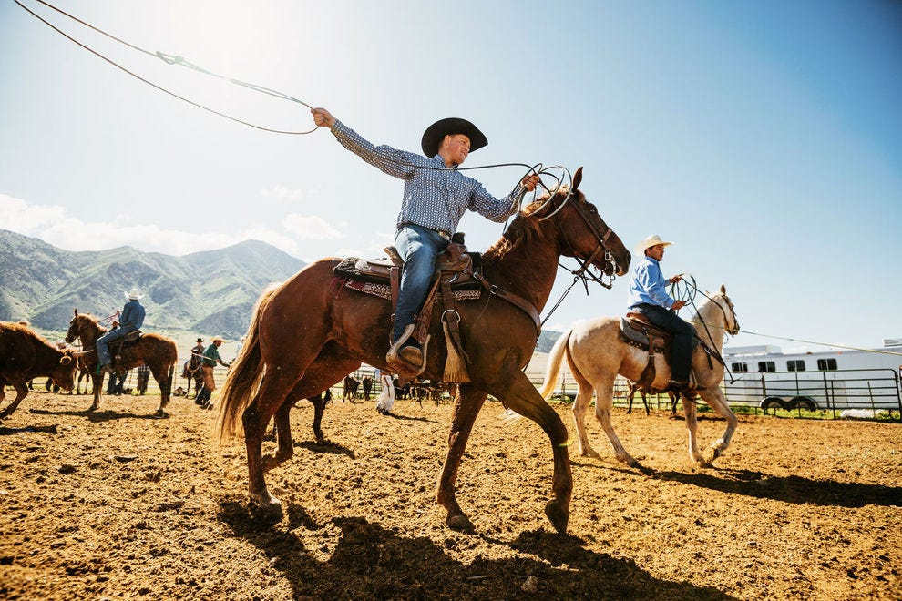 Rodeos feature several competitive events related to cattle herding
