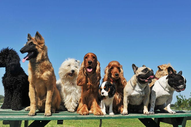 Around the world in 50 dogs: Incredible international breeds