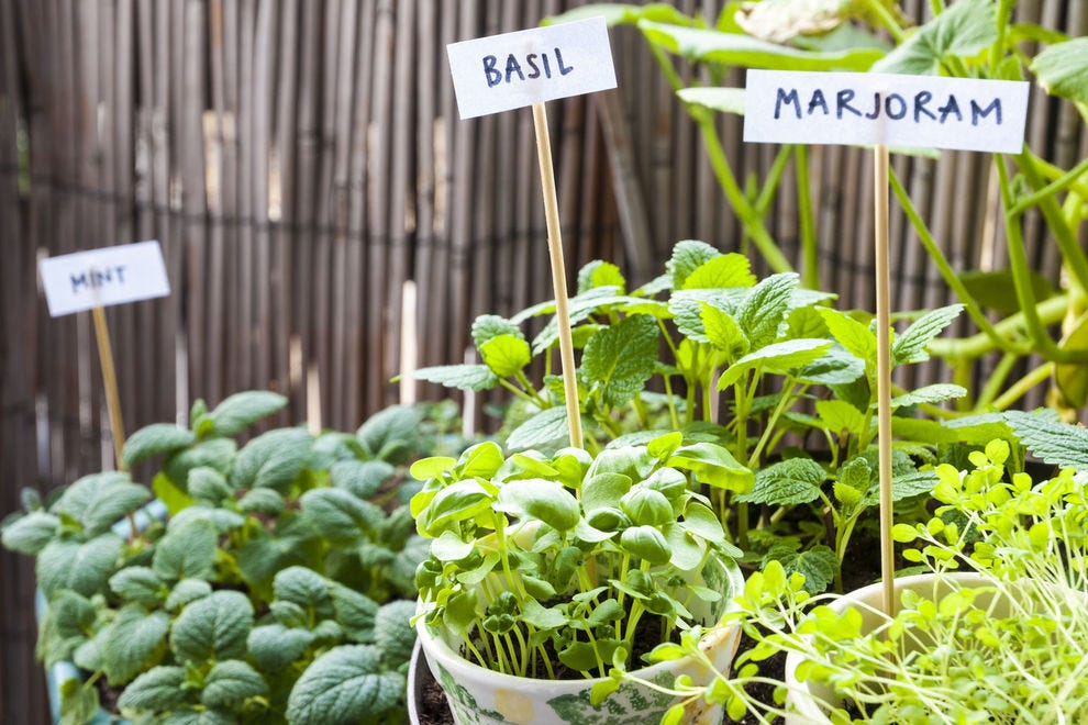 Home gardening is a rewarding activity, plus, it guarantees your herbs are at their freshest!