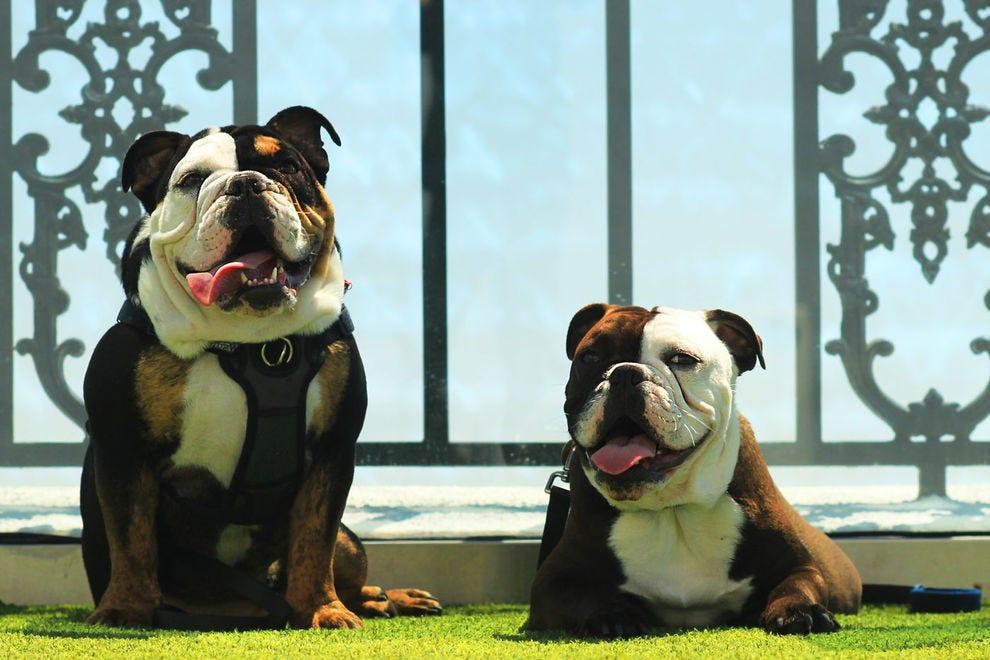Winston & amp;  Churchill