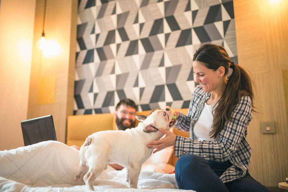 Four-legged family members are welcome at these hotels